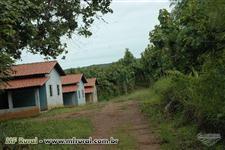 Fazenda com reflorestamento de madeira teca