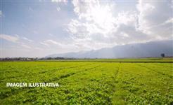 Fazenda com 400 hectares em Bela Vista/MS