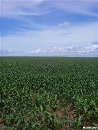 Fazenda com 9.967 hectares - Em Novo São Joaquim/MT