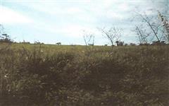 Fazenda 1.072ha em Rio Branco/AC
