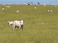 Fazenda para gado de corte