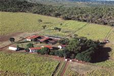 FAZENDA PLANA (300 ha) A 70 KM DE FORMOSA - GO
