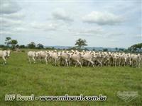 Fazenda São Raimundo
