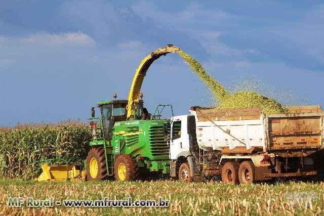 Colhedora Forrageira Automotriz para colheita de Silagem