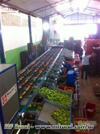 Calibrador Eletronico para Frutas