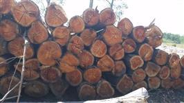 Mato, Floresta, Reflorestamento, Tora de Eucalipto e Pinus