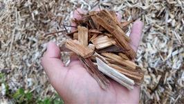 Biomassa, Cavaco Eucalipto, Acacia e Pinus