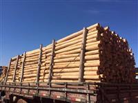 EUCAFLORA - Eucalipto tratado para cercas, mourões, poste de energia, ETC