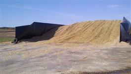 Silagem de milho (Silo 250 toneladas fechado)