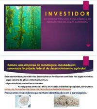 Investidor