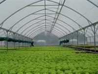 Tela Alface/ Tela Agrícola FreshNet  35% 50% 65% /  Sombrite  Agrícola 35% 50% 65% 80%