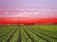 TELA SOMBRITE AGRÍCOLA  VERMELHA 35% 50% -TELAS AGRÍCOLA FRESHNET 35% 50% 65%