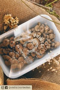 Cogumelos shimeji shitake e champignon de paris - direto do produtor