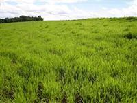 Fazenda com melhor beneficio pecuária ou agropecuaria