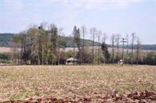 Àrea com 69 alqueires de terras vermelha para plantio de soja e outras culturas