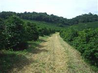 Fazenda Ouro Fino/MG