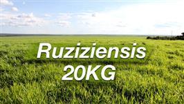Brachiaria Ruziziensis cv. Ruziziensis Revestida : 20kg