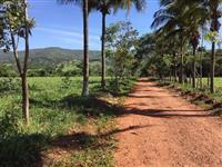 Fazenda  104Alqueiroes às margens da BR-153