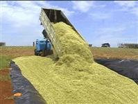 Silagem de Milho AgriPec Bahia