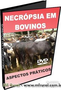SBT115 - Como Fazer Necropsia em Bovinos - Aspéctos Práticos - DVD
