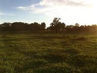 Fazenda Joao Pinheiro 300 hectare