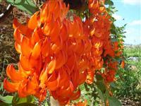 Plantas Ornamentais, Palmeiras