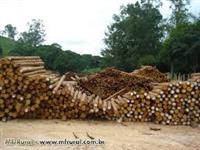 Madeira tratada em autoclave de eucalipto do tipo cloesiano,