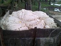 Massa de Soja / Farelo centrifugado de Soja / Massa Branca / Pasta de Soja
