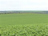 Fazenda de 117 hectares +\-