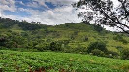 Fazenda Fanny Reis  493 HA Rio BOM - Pr.
