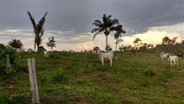 Fazenda Umuarama II  916.6 HA em Alvorada D