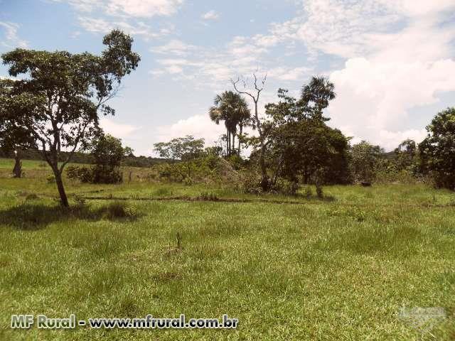 Sitio de 30 hectares a venda em Campo Verde MT Fazendas ... - photo#37