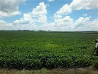 fazendinha de 60 hectares em Campo Verde MT