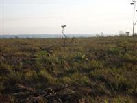 Fazenda à venda em Nova Brasilândia/MT