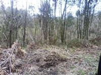 Área para reserva ou compensação florestal
