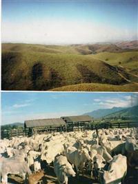 Fazenda Itatiaia