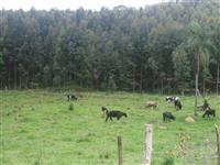 Fazenda no Paraguai com 6200 ha em Alto Parana - PY.