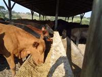 Gerente  de  Fazenda