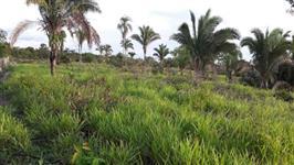 Fazenda na Região de Recursolândia, Tocantins