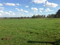 Fazenda 260 Ha Campo Grande