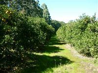 Vendo área de terras de 32 hectares