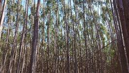 Compramos eucalipto e pinus