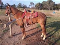 Vendo cavalo 1/2 sangue QM