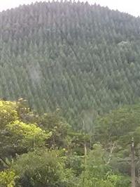 fazenda 90 alq (200 ha)