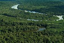 SERINGAL NO MUNICIPIODE EIRUNEPÉ - AMAZONAS