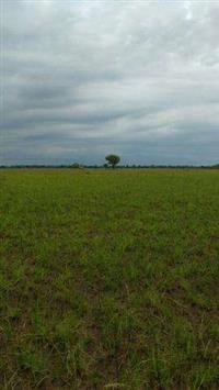 Oportunidade unica fazenda _ são Felix do Araguaia 1198 alqueires