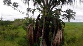 Belíssima fazenda Tupaciguara 548 alqueres