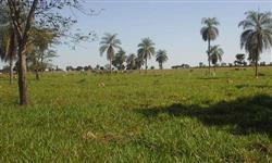 Fazenda de 1900 alqueires Gurupi to