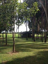Bela Fazenda de 4.840 Hectares no Tocantins