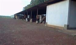 Fazenda Pecuária 11.000 Hec. Matupá – MT